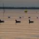 blog naviguer bassin arcachon 80x80 - Conciliation et arrêtés : du nouveau sur le décret Arguin