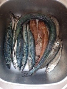 13 mini IMG 9758 225x300 - Fishing Day 2019 : une 6ème édition réussie !